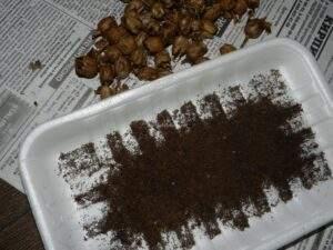 семена табака выпотрошены