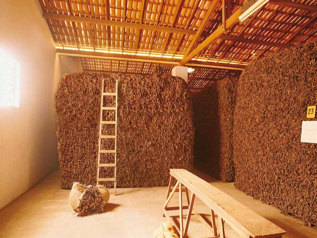 Табачный бизнес, выращивание табака как бизнес