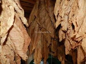 хранение табака в гаванках