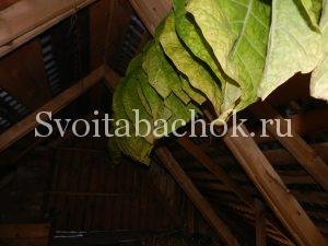 Сушка листьев табака на чердаке
