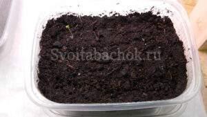 Выращивание табака или как вырастить табак