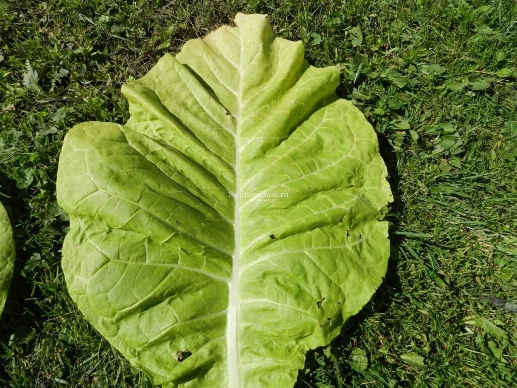 Как сделать табак из листьев