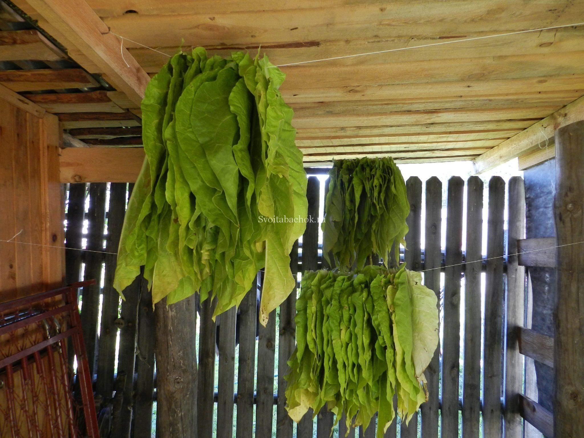 Причёски повседневные на короткие волосы в домашних условиях пошагово в 6