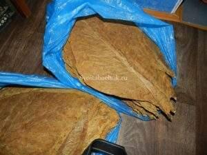 увлажнение листового табака