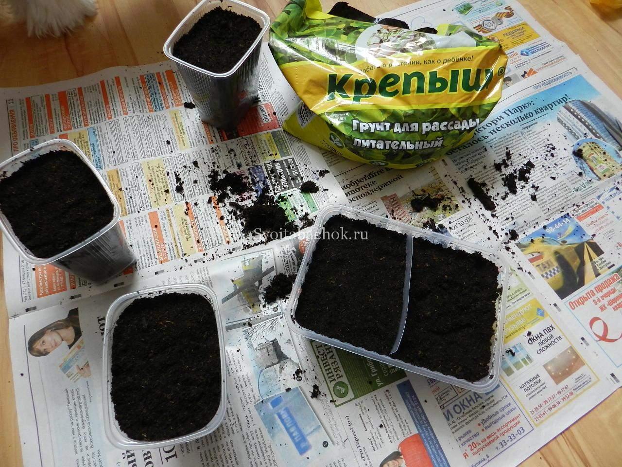 Табак душистый, выращивание из семян, посадка и уход за ним 91