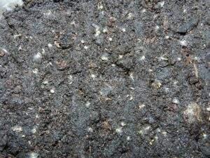 Фото проросших семян табака