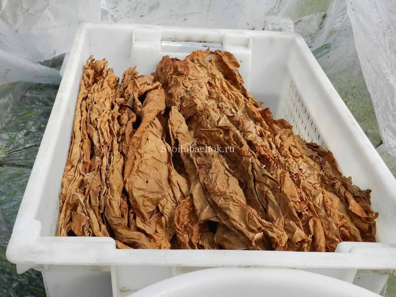Как заготовить табак в домашних условиях