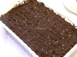 Семядольные листья табака